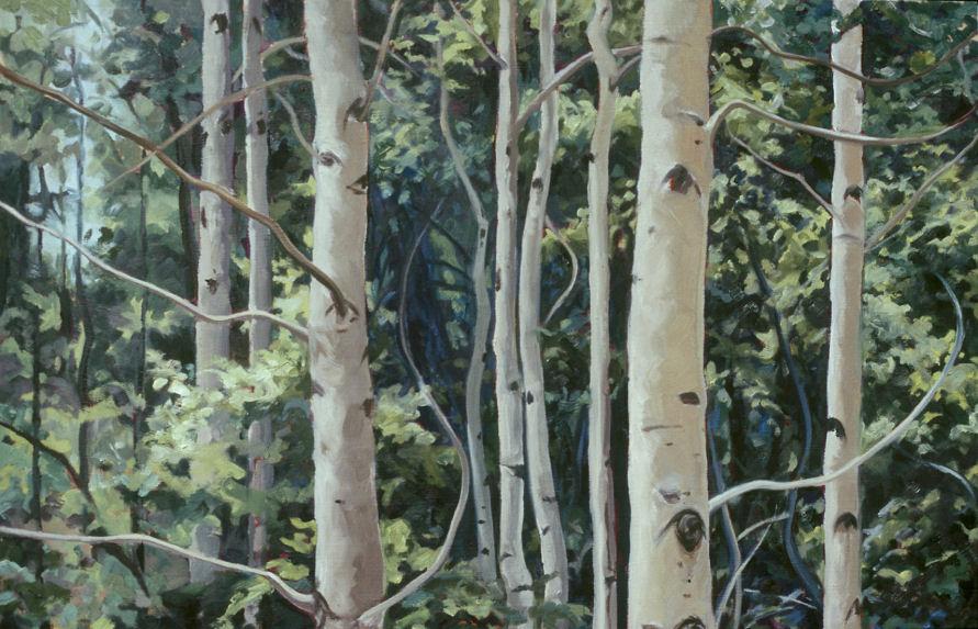 Taos Aspen 2